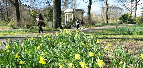 daffodils botanic gardens christchurch